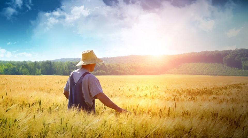 Aviva<br /> Multirischi Agricoltura